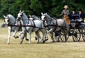 Соревнования за Кубок Федерации конного спорта России по драйвингу
