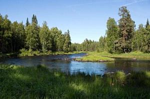 Лесные заботы «АН-Секьюрити»