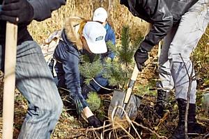 Жители Новосибирска приумножили лесные ресурсы при поддержке бренда «Сибирский бочонок»