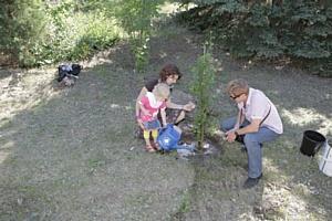 «Родники России» посадили аллею к 70-летию победы в Сталинградской битве