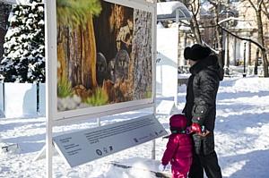 Выставка «Лесные истории. Зима»