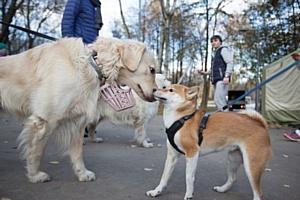 Purina поддержала благотворительный забег в пользу бездомных животных