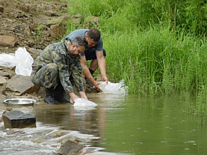 «Азот» выпустил 60 тысяч мальков хариуса в воды реки Томь