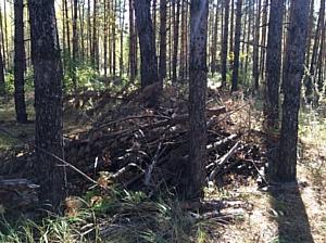 Сигнал челябинских активистов ОНФ о вырубке услышали в окружном департаменте лесного хозяйства