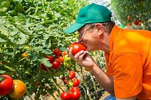 Искусство агротехнолога открытого и закрытого грунта