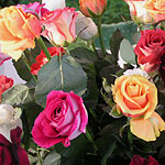 Букет из девяти с половиной роз на www.SendFlowers.ru
