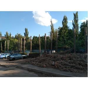 ОНФ попросил провести проверку травматичной для деревьев обрезки в Семилуках
