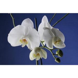 1500-ая белая орхидея. Праздник детей из «пробирки» в Днепропетровске