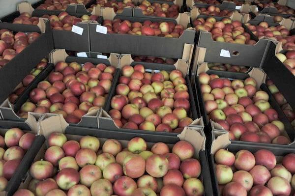 Смоленские таможенники задержали  польские яблоки, американские фисташки и говядину без документов