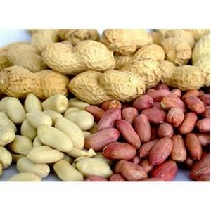 ФГБУ «ЦОКЗ» подтверждено соответствие качества арахиса из Бразилии