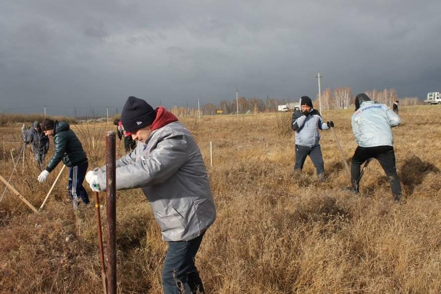 Челябинские активисты ОНФ высадили сосны и дубы возле федеральной трассы Р-254