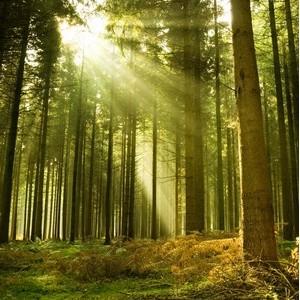 Сегодня - День работников леса