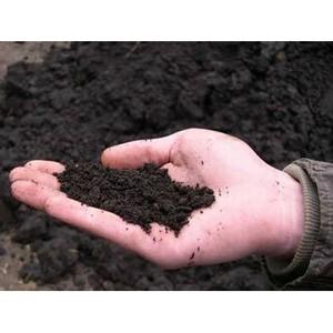 Земли захламлены, плодородный слой почвы снят