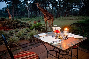 Volmar Safaris приглашает на завтрак с жирафами в Кении