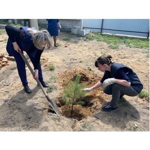 Пятьдесят сосен обрели «зелёное» будущее