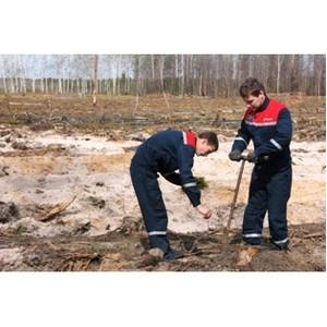 Сотрудники филиала «Рязаньэнерго» восполняют лесные ресурсы  в Сасовском районе