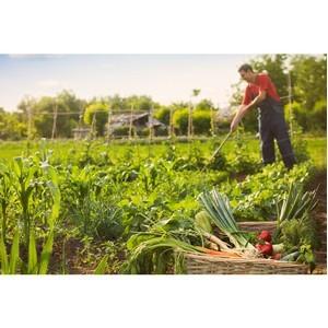 Клиенты РСХБ  смогут получать кэшбэк фермерскими продуктами