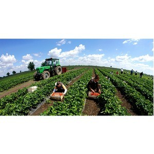 Пять профессий в сельском хозяйстве, которые скоро исчезнут