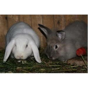Белгородский филиал Россельхозбанка выступит партнером межрегиональной выставки кроликов