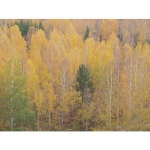 Лесной массив  на ул. Амундсена – Разливной под угрозой вырубки
