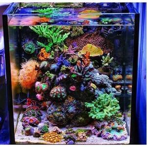 Прелесть владения морским аквариумом