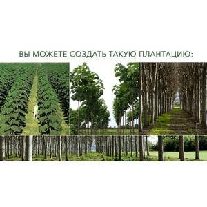 Новый тренд: создание плантаций быстрорастущей древесины