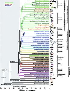 Ученые из НГУ помогли составить новое древо птиц