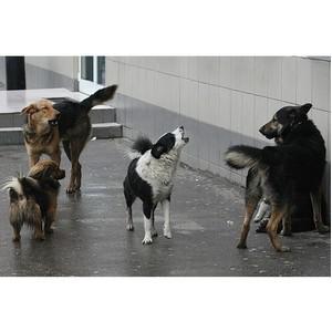 ОНФ в КБР предложил властям урегулировать вопросы гуманного отношения к безнадзорным животным