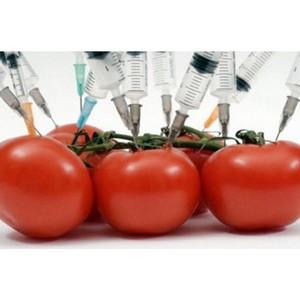 О распространении ГМО в мире