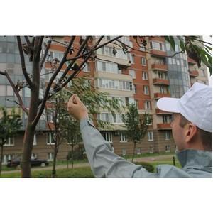 ОНФ в Санкт-Петербурге обнаружил пример фальшивого озеленения сада с помощью скотча