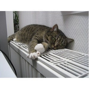 ОНФ в Коми помог наладить теплоснабжение в многоквартирном доме в Емве