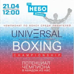 Чемпионат по боксу среди любителей состоится в ТРК «Небо»