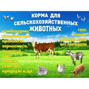 Декларирование сельхозпродукции и кормов на юге России — итоги 11 месяцев