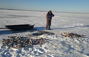 В Новосибирской области вырос объем промышленного вылова рыбы.