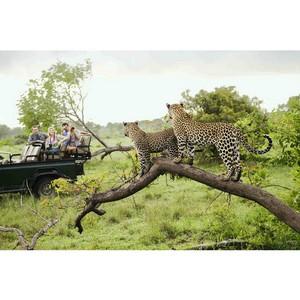 Лев сбежал из заповедника в южной области ЮАР. Местные жители в панике