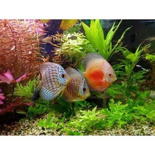 Советы новичку: выбираем аквариум