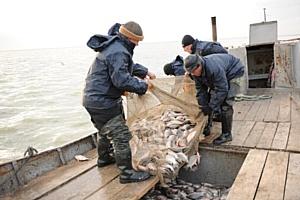 С начала текущего года в водоемах Новосибирской области добыто более 3 161 тонны рыбы.