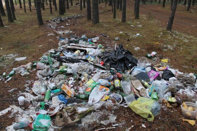 Кировские активисты ОНФ обнаружили свалки мусора в лесном массиве недалеко от села Митино