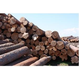 Таможенники Сибири ведут борьбу с незаконным оборотом лесной продукции