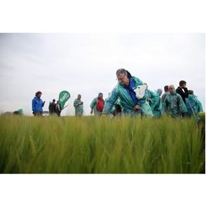 На «Дне поля» Carlsberg Eastern Europe представили инновационный сорт пивоваренного ячменя