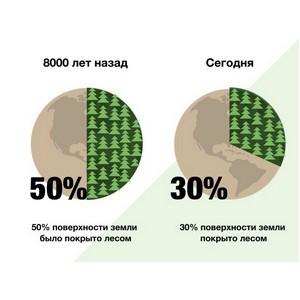 Российских школьников и студентов научат беречь лес