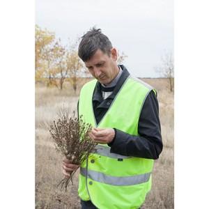 О карантине растений в Волгоградской области в октябре 2017 г.