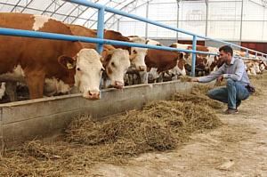 В Жиздринском районе Калужской области открыта роботизированная ферма