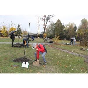 Команда «Молодежки ОНФ» высадила деревья в парке Патриотов Воронежа