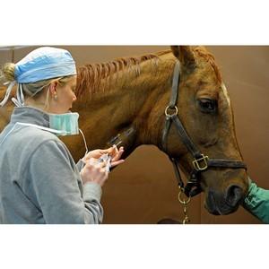 31 августа - День ветеринарного работника России