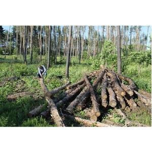 ОНФ призвал региональные власти защитить от вырубки сосновые леса в Рамонском районе