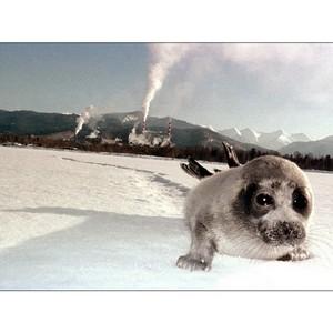 Технологии для решения экологических проблем Байкальского региона