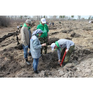 Активисты ОНФ в Алтайском крае приняли участие в акции «Лес Победы»