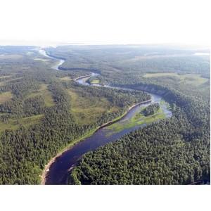 P&G и Лента вместе с WWF защитят от вырубки леса вдоль нерестовых рек