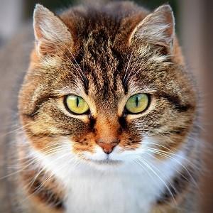 Вопросы от владельцев кошек. Как правильно кормить кошку?